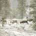 """Blogbeitrag """"Norway Landscapes"""""""