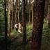 "Blogbeitrag ""Forrest"""