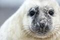 Robben für Robben