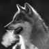 """Blogbeitrag """"Wölfe"""""""