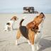 "Blogbeitrag ""dogs Magazin"""