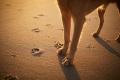 DOGS Magazine