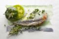 Fisch-Aquarelle I/2017