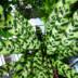 "Blogbeitrag ""Emerald Green #1"""