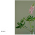 """Blogbeitrag """"My Garden"""""""