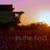 "Blogeintrag ""In the field"""