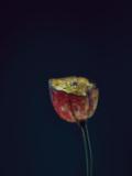 Assaulted Flowers