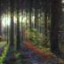"Blogbeitrag ""Forest Bathing"""