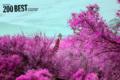 Pink Safari