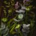 """Blogbeitrag """"Flower Power"""""""
