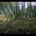 """Blogeintrag """"Watching grass grow"""""""