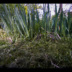 "Blogbeitrag ""Watching grass grow"""
