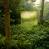 "Blogbeitrag ""Jungle"""
